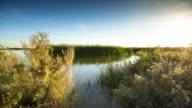 Salton Sea Tidal Marsh Timelapse