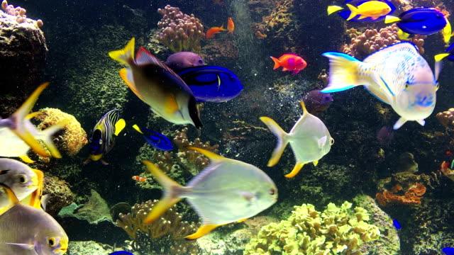 Saltvattenfisk