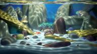 Saltwater Paradise Seamless loop