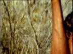 San bushman throws spear into exhausted Kudu antelope after 8 hour long hunt through Kalahari desert, Southern Africa