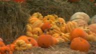 San Francisco, CaliforniaPumpkins, squash on hay bails