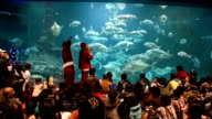 Santa Claus in scuba gear appeared inside an aquarium at the Wakayama Prefectural Museum of Natural History in Kainan on December 11 Japan polishing...