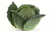 ZI, ECU, Savoy cabbage on white background