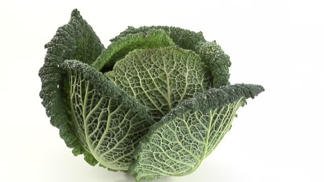 ZI, ECU, Savoy cabbage on white background