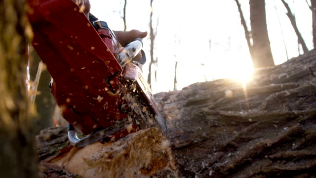 SLO MO Sawdust flying while cutting a tree
