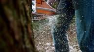 SLO-MO-Sägemehl Partikel fliegen als Kettensäge schneidet einen Baum