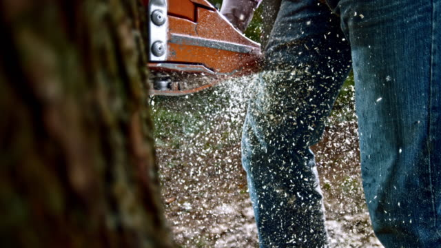SLO MO Sawdust particles flying as chainsaw cuts a tree