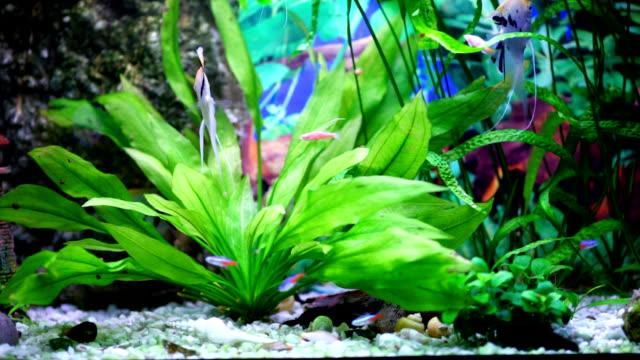 Scalar fish.