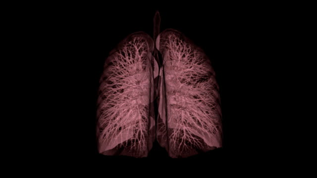 3D CT Scan Image of Human Lung