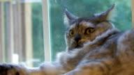 Gatto spaventato 1-HD 30F