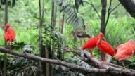 scarlet ibis standing on tree branch in zoo