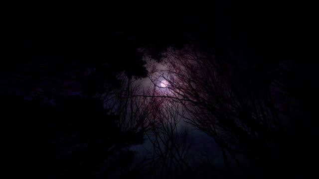 Beängstigend blutig Roter Mond im Wald