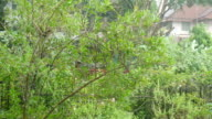Scenery view in rainy day