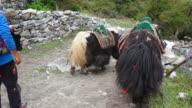 Scenes of Kathmandu and Mount Everest, Nepal