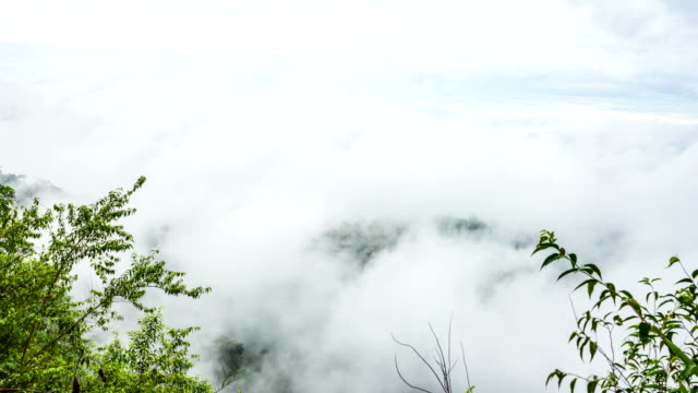 Scenic Landscape of Fog Rolls Across Flowing over Tropical Mountains, Time Lapse Video
