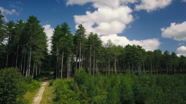Malerische Aussicht über Cornwall Waldlandschaften - 4K fliegen