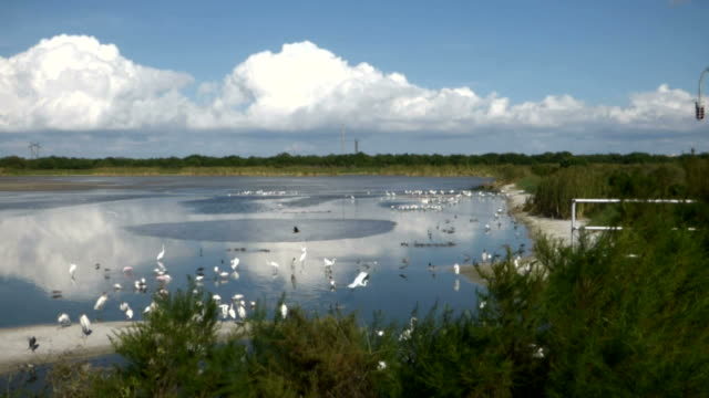 Scenic View of Wetlands and Sky