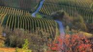 Scenic vinyards, nr Alba, Langhe, nr Piedmont, Italy, Europe
