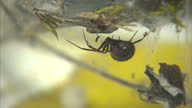 A school in Gloucestershire has been shut for a second day after venomous false widow spiders were discovered in the IT department Pest control...