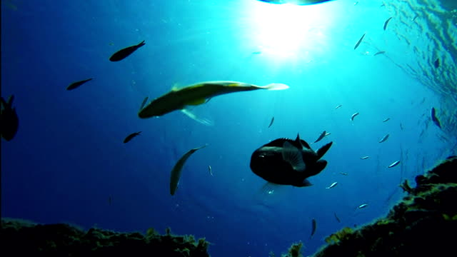 School of fish swimming under sea