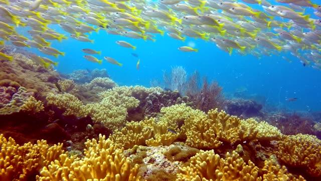 School van vis twee plek Snapper (Lutjanus biguttatus) en Big Eye Snapper (lutjanus Lujanus)