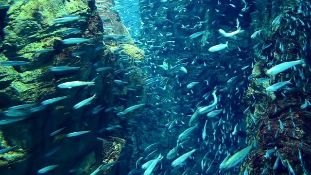 School Of Sardine In The Sea
