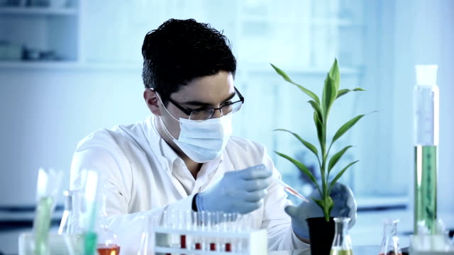 A scientist doing an experiment on plants
