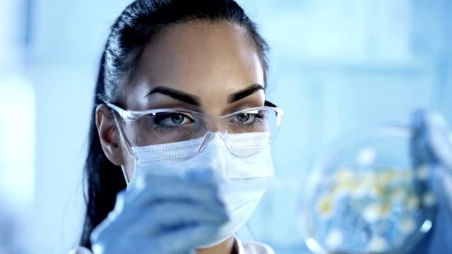 Scienziato esamina una piastra di petri con culture batterica
