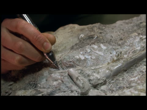 ECU scientist exposing fossil from rock with drilling tool
