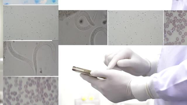 scientist in laboratory. HD video