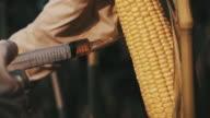 SLO MO Scientist modifying the corn