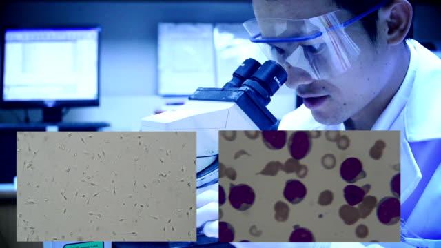 scientist testing in laboratory. HD video