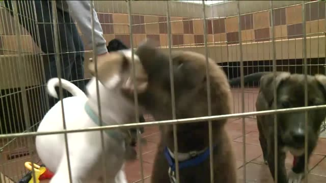 WPIX Scores of puppies kittens dogs and cats from Oklahoma are up for adoption The North Shore Animal League brought them east so shelters there...