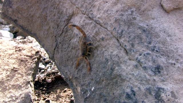 Scorpion on the Rock