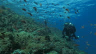 Scuba diver swimming at the coral reef undersea