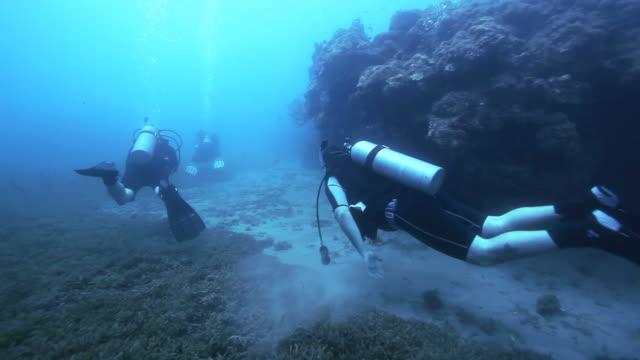 WS Scuba divers underwater / Caribbean Sea