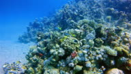 Scuba diving on coral reef by Marsa Alam / Red Sea - Egypt