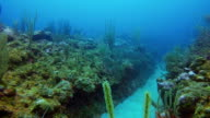 Scuba diving on coral reef on Caribbean Sea / Belize