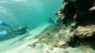 scuba on reef