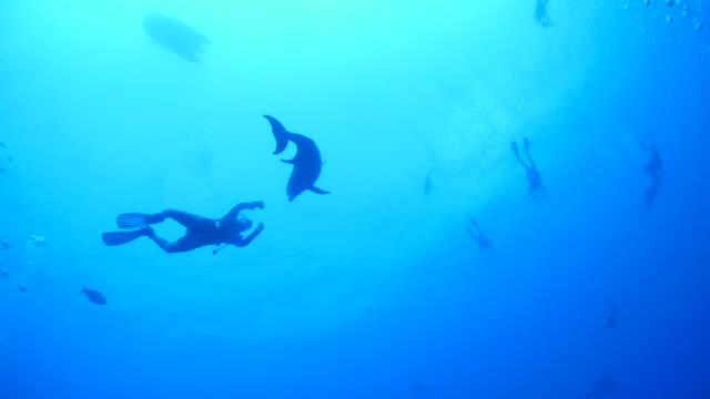 Scuva diver playing with wild dolphin