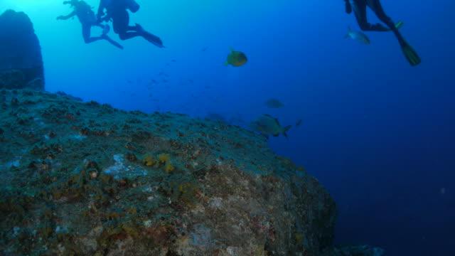 Sea bream fish in the reef