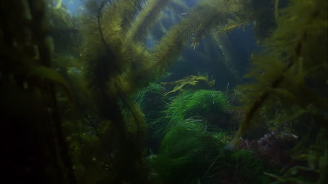 SLO MO CU Sea floor with variety of underwater plants / Moorea, Tahiti, French Polynesia