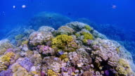 Sea life on beautiful coral reef with lot of tropical Fish in Red Sea nearby Marsa Alam