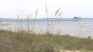 Sea Oats by the Gulf (HD)