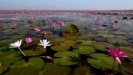 hav av röd lotus lake, Thailand