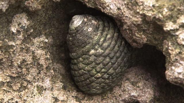 A Sea Snail Among Rocks