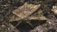 A Sea Snail On Rock