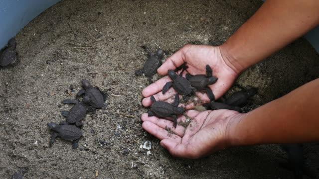 Sea Turtle Eggs with Newborn Animal in Hatchery