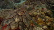 Sea turtle swimming over coral and small fish