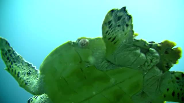 CU Sea Turtle